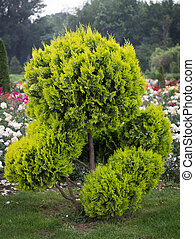 Decorative tree in Formal Garden with flovers