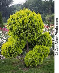 Decorative tree in Formal Garden