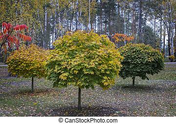 Decorative trees in the autumn Park.
