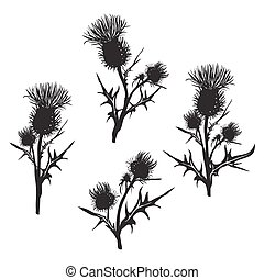 Decorative vector thistle (Carduus acanthoides) on white...