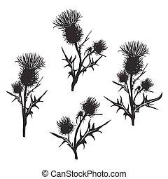 Decorative vector thistle (Carduus acanthoides) on white...