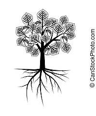 decorativo, árvore abricó