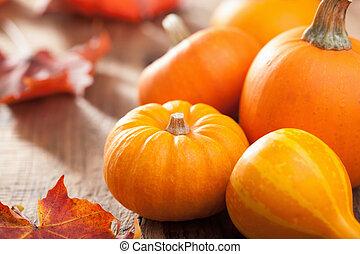 decorativo, abóboras, e, outono sai, para, dia das bruxas