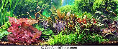 decorativo, acuario