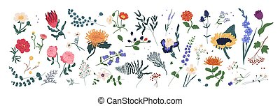 decorativo, conjunto, pradera, elements., wildflowers, ...