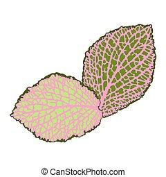 decorativo, dettagliato, naturale, isolated., foglie, illustrazione, astratto