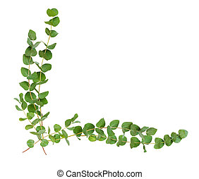 decorativo, eucalipto, folhas, canto, arranjo