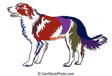 decorativo, ficar, coloridos, collie, cão, ilustração, vetorial, retrato, borda