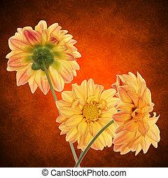 decorativo, fiore, disegno, giallo