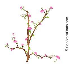 decorativo, flores côr-de-rosa, ramos