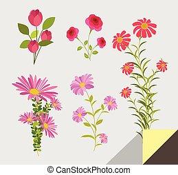 decorativo, flores, conjunto, elementos