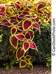 decorativo, hojas, diseño, coloreado