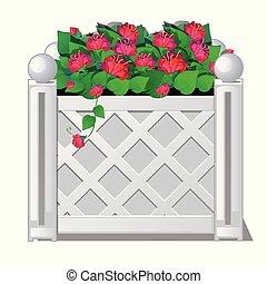 decorativo, illustration., recinto, flowers., vettore, rosso