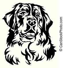 decorativo, montagna, vettore, cane, illustrazione, bernese, ritratto