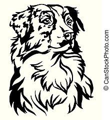 decorativo, pastor, cão, ilustração, vetorial, retrato, australiano