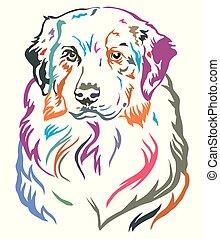 decorativo, pastor, coloridos, ilustração, vetorial, retrato, australiano
