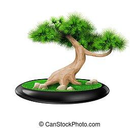 decorativo, pino, olla, bonsai