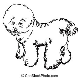 decorativo, posición, bichon, perro, ilustración, vector,...