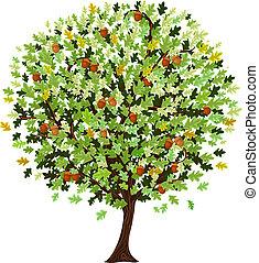 decorativo, roble, árbol