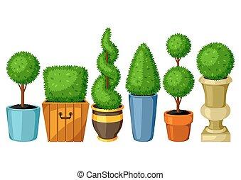 decorativo, set, giardino, albero, bosso, topiary, plants., vasi fiori