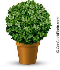 Decorativo cespuglio bosso decorativo pianta due for Bosso vaso