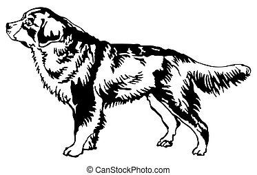 decorativo, standing, cane montagna bernese, illustrazione, vettore, ritratto