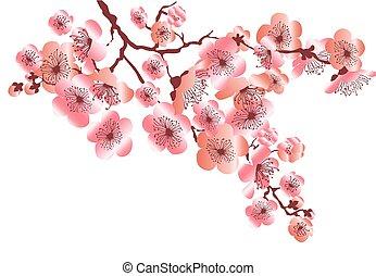decorativo, stile, fiore, illustration., oro, colorare, rosa, fiore, elegante, vettore, disegno, sakura, tenero, mazzo, celebrazione