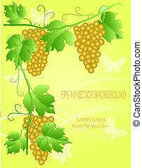 decorativo, uva, ilustración
