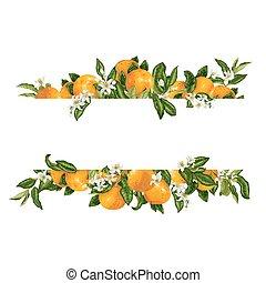 decprative, elemento, fruta cítrica, vector, plantilla, marco, flores, fruits