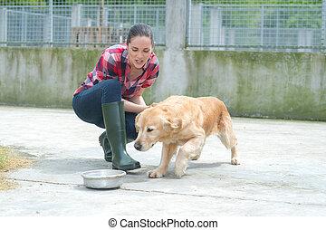 dedicato, ragazza, addestramento, cane, in, canile