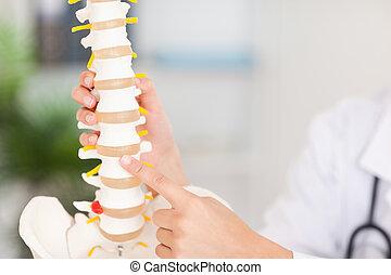 dedo que señala, en, hueso, en, espina dorsal
