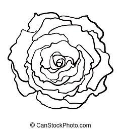 Hellebore Christmas Rose Single Flower Top View Sketch Style