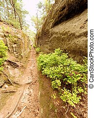 Deep entrance path in sandstone block. Historical path through forest