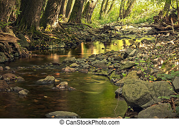 Deep forest creek with rocks
