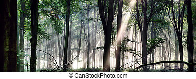 Deep forest morning light - Deep forest landscape with misty...