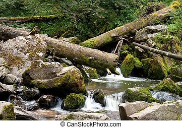 Deep forest river landscape