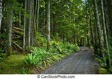 Deep Forest Road. US Pacific Northwest Rainforest. Olympic...