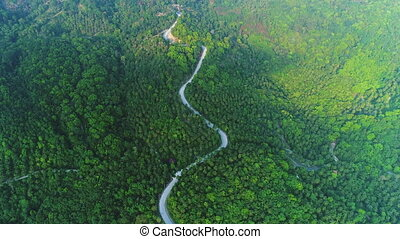 deep forest tree landscape curved road aerial view - Deep ...