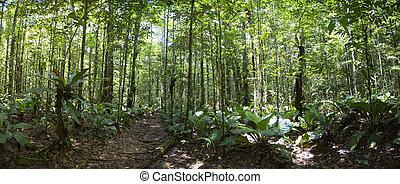 Deep green jungle forest in Salto Angel, Canaima, Venezuela...