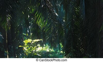 Deep In The Jungle, Costa Rica, Graded Version