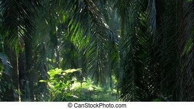Deep In The Jungle, Costa Rica, Native Version - Native...