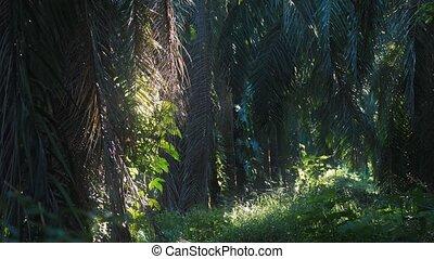 Deep In The Jungle, Costa Rica, Rack Focus, Graded Version -...