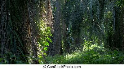 Deep In The Jungle, Costa Rica, Rack Focus, Native Version -...