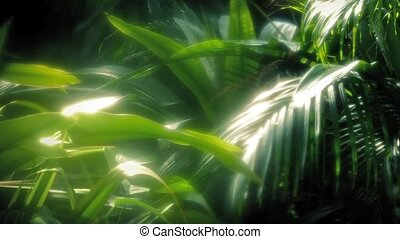 Deep In The Rainforest - Large ferns and other plants in hot...