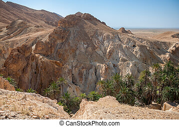 Deep mountain gorge with palm trees in the desert