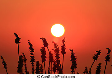 Deep orange sun and sky with plant silhouettes in foreground