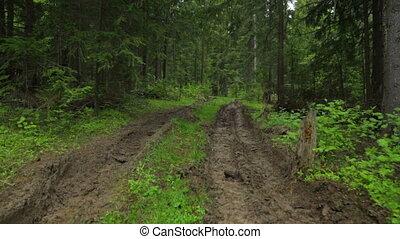 deep-rutted, été, route, forêt
