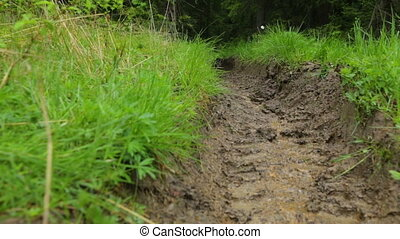 Deep-rutted forest road in summer