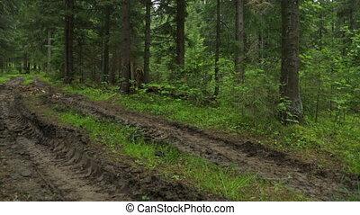 deep-rutted, route, été, forêt