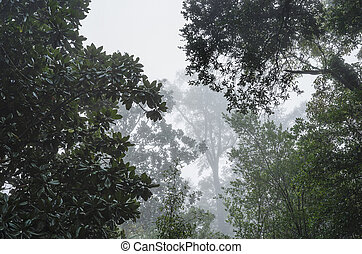 Huge live oaks and dark waxy magnolia trees form a moody canopy on a foggy humid morning in the Deep South USA. Good mood or background shot.